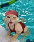 Happy As A Cat In The Water Picture